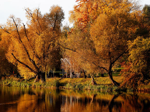 Autumn colours are seen on foliage in a park in Minsk
