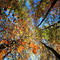 Autumn colours are seen on foliage at Oetscher Nature Park near Wienerbruck