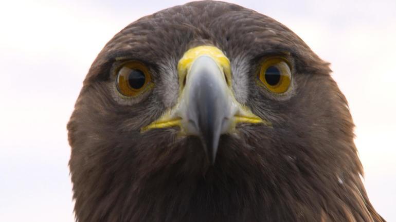 eagle-pov.jpg
