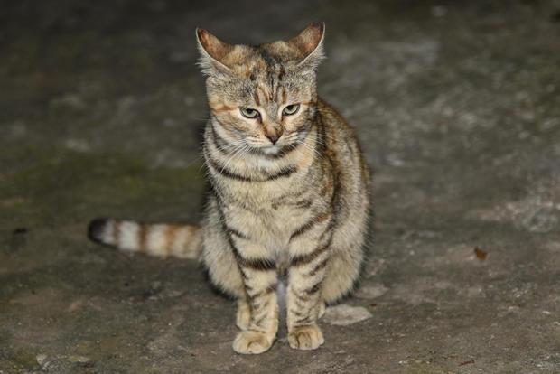 Stray cats on Euboea