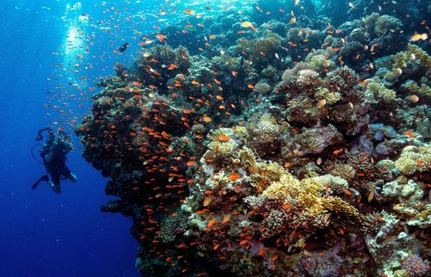 TOPSHOT-EGYPT-NATURE-MARINE-ANIMAL-FISH