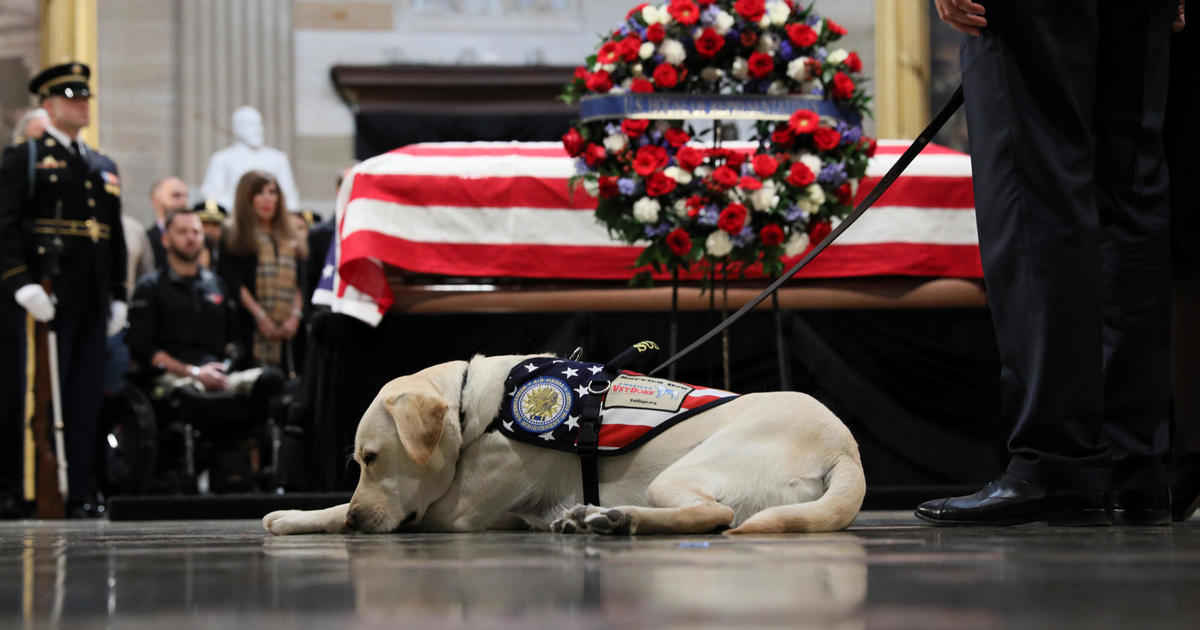 President George H.W. Bush's service dog to work with veterans in new role