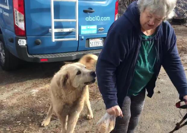 California Wildfire Dogs Long Wait