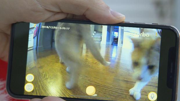 furbo-dog-camera-620.jpg