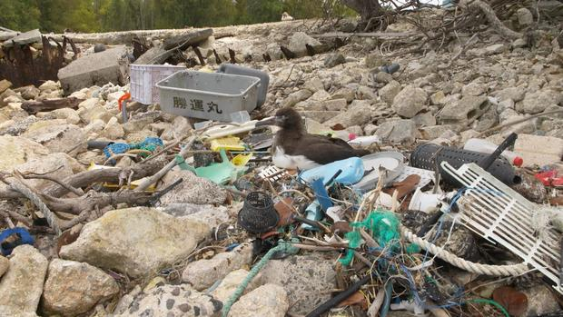 plastic-part-2-midway-albatross-sits-in-plastic-debris-1.jpg