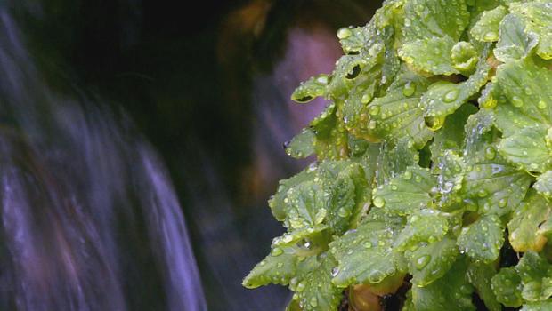 kirkham-hot-springs-idaho-jamie-mcdonald-c-620.jpg