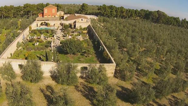 olive-trees-villa-cappelli-in-puglia-620.jpg