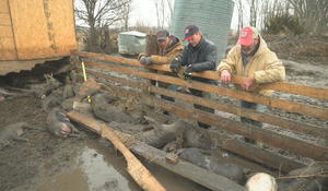 Farmers devastated by historic flooding in the Midwest