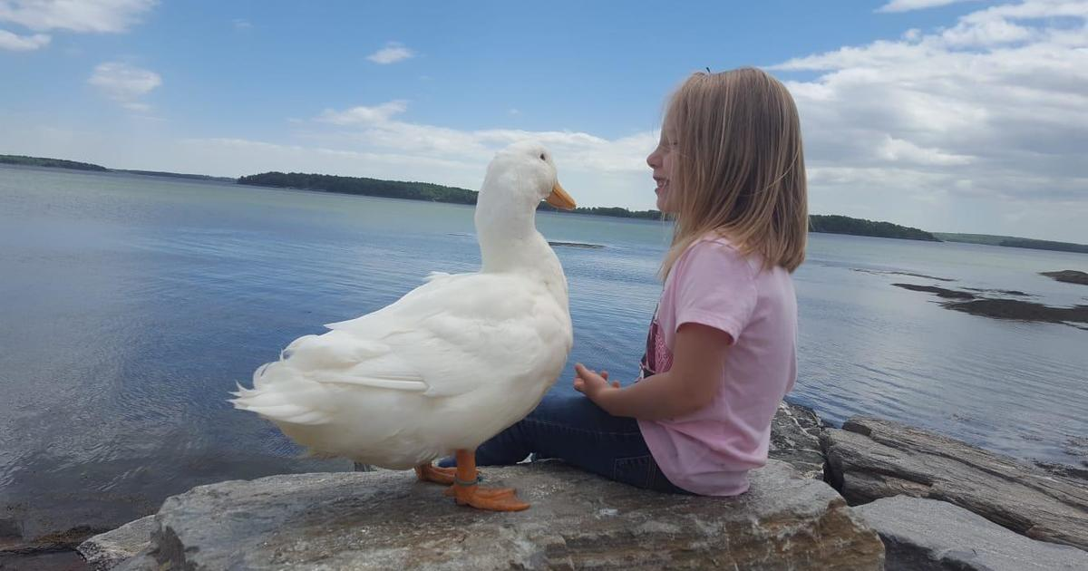 Kylie Brown and Snowflake: A girl's unbreakable bond with her pet duck grows deeper every day