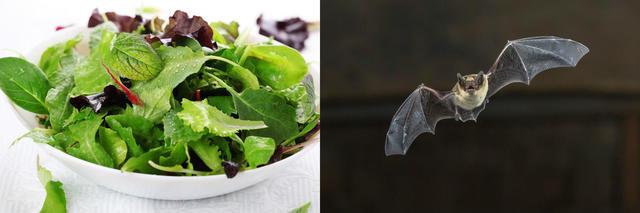 recall-salad-greens.jpg