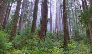 0408-sunmo-naturerainforest-replace-1823344-640x360.jpg