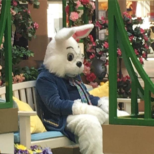 bad-bunny-saxicat.jpg