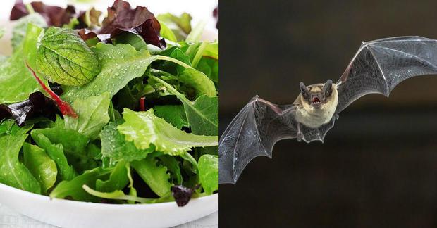 America's surprising food recalls