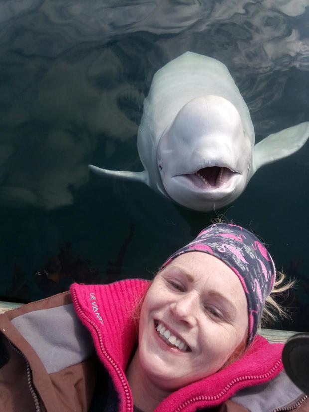 Norway Beluga Whale