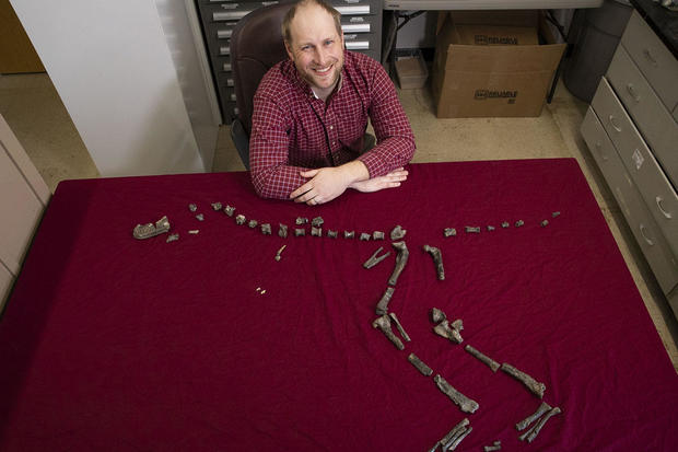 Tiny T. rex relative identified