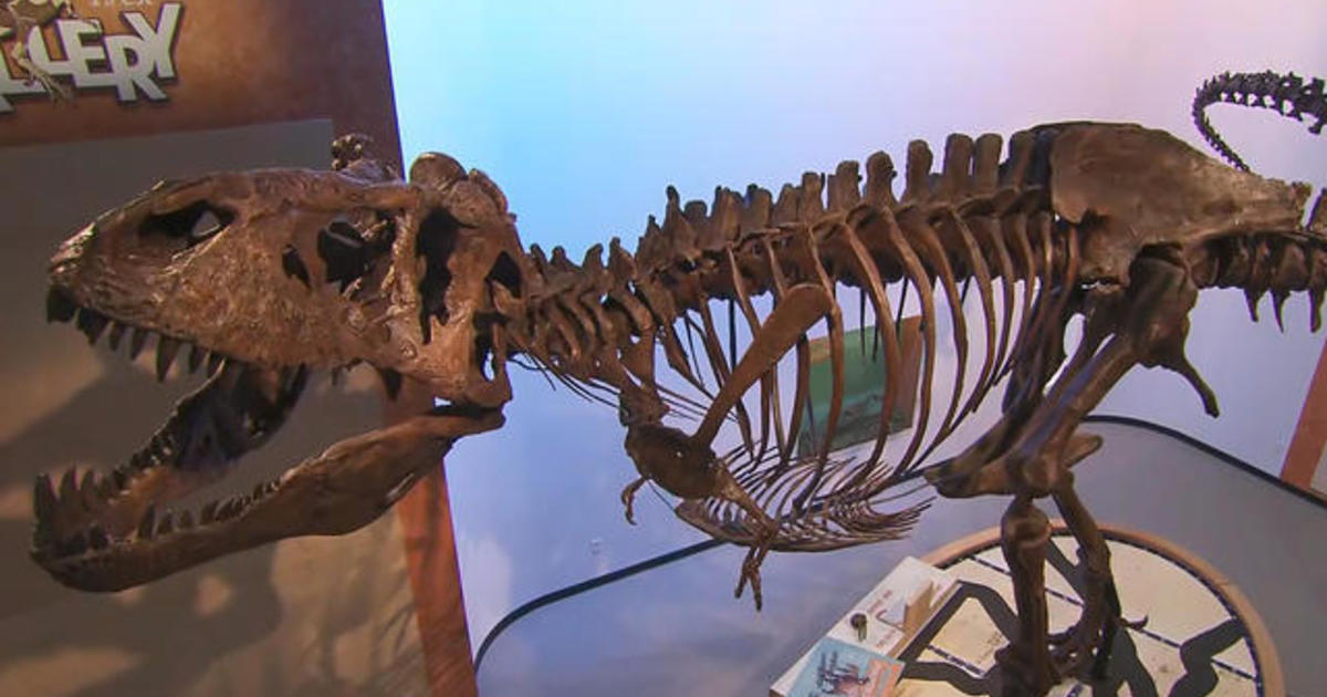 A first look at Scotty, the largest T. rex to roam the Earth