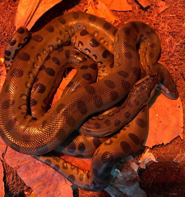 baby-anaconda-2-848x900.jpg