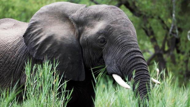 elephant-giraffes-zimbabwe-040819-broll-01-03-41-18-still001.jpg