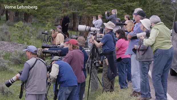 bear-voyeurs-at-yellowstone-verne-lehmberg.jpg