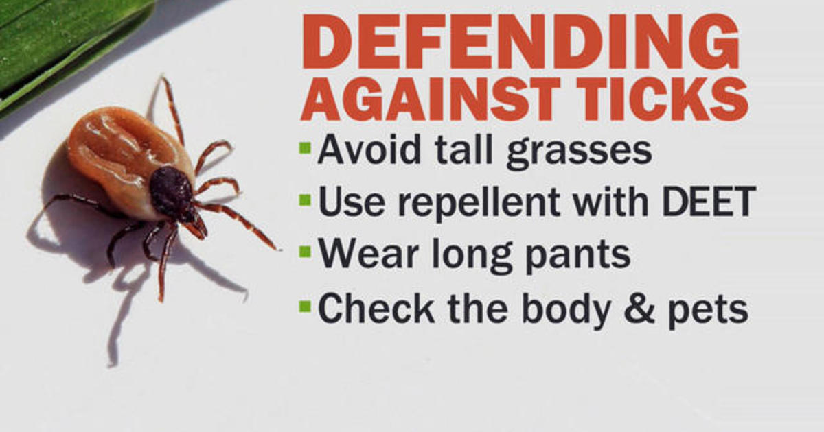 Dangerous ticks are on the rise  Here's what you need to