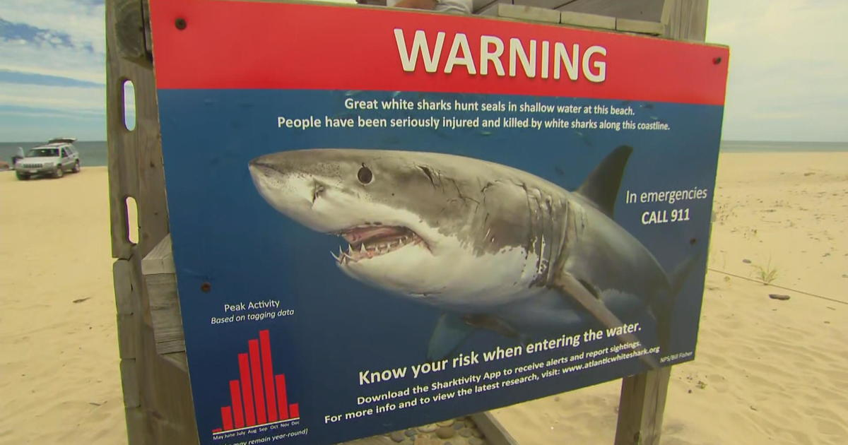 Sharks in Cape Cod: Sharks, airbnb tax take big bite out of