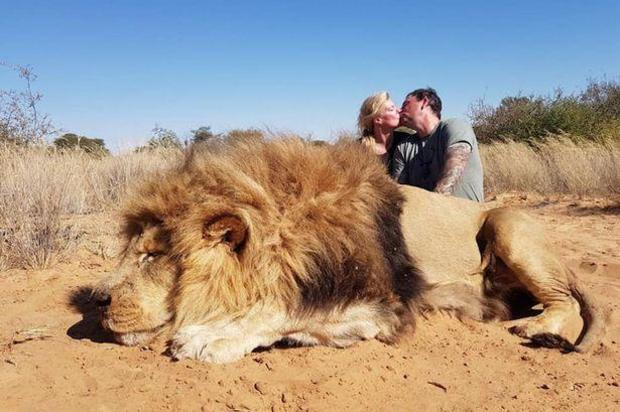Canadian Couple who owns Solitude Taxidermy poses for romantic photo with lion they shot and killed in South Africa, horrifying animal rights activists, Daily Mirror and PETA
