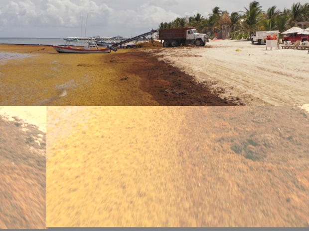 sargassum-yucatan-beaches-promo.jpg
