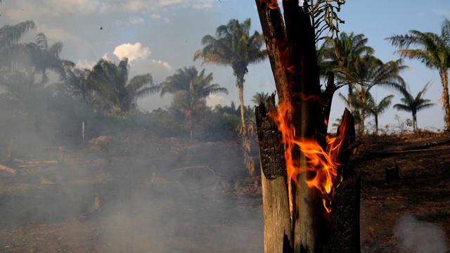 Amazon jungle fire