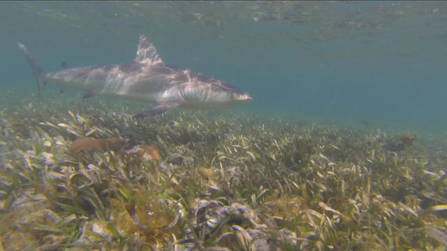 phillips-shark-tagging-082219-newspath-frame-2591.jpg