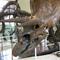 triceratops-at-american-museum-of-natural-history-judy-lehmberg.jpg