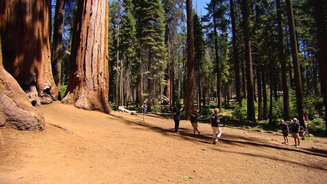 0827-ctm-sequoiapark-vigliotti-1920933-640x360.jpg