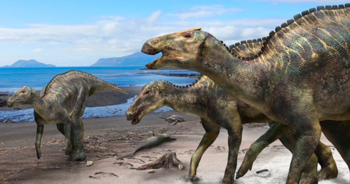 New species of dinosaur discovered in Japan