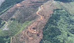 The debate over Pacific Northwest forests: Clear-cut or protect?