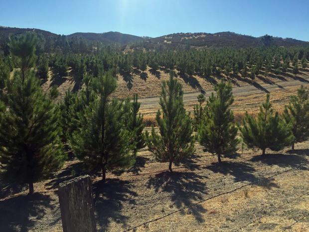fred-woods-treefarm.jpg