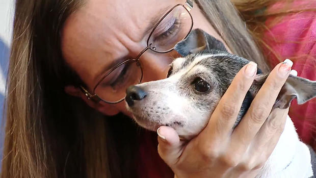 Missing dog reunited with owner 12 years later and 1,000 miles from home