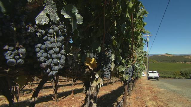 1019-satmo-wineclimate-1954812-640x360.jpg