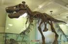 t-rex-skeleton-promo.jpg