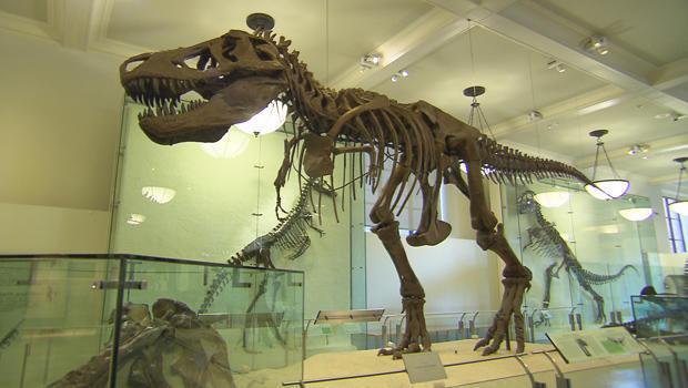 t-rex-skeleton-620.jpg