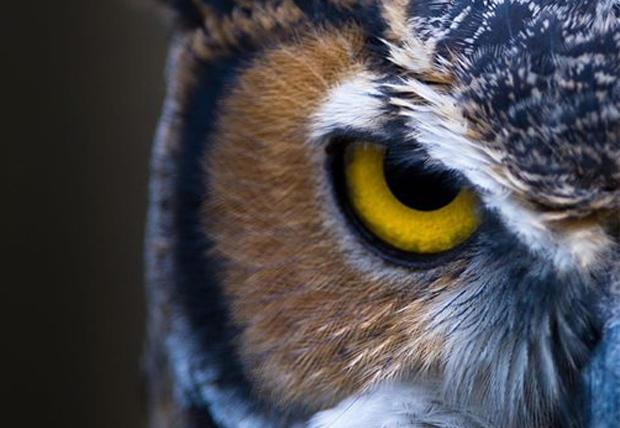 oakwoods-metropark-owl-festival-620.jpg