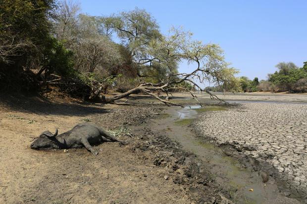 Zimbabwe Wildlife Drought