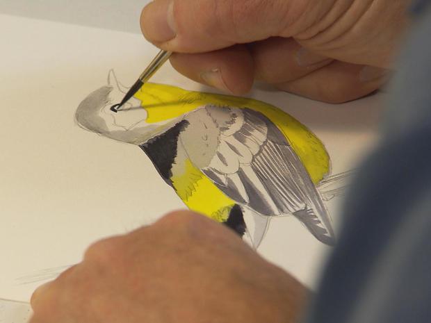 bird-illustrator-david-sipley-at-work-promo.jpg