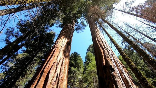 1118-ctm-sequoiascience-vigliotti-1979267-640x360.jpg