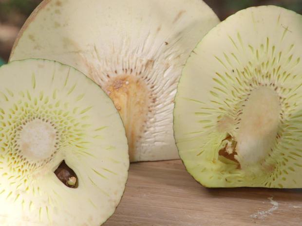 breadfruit-cut-promo.jpg