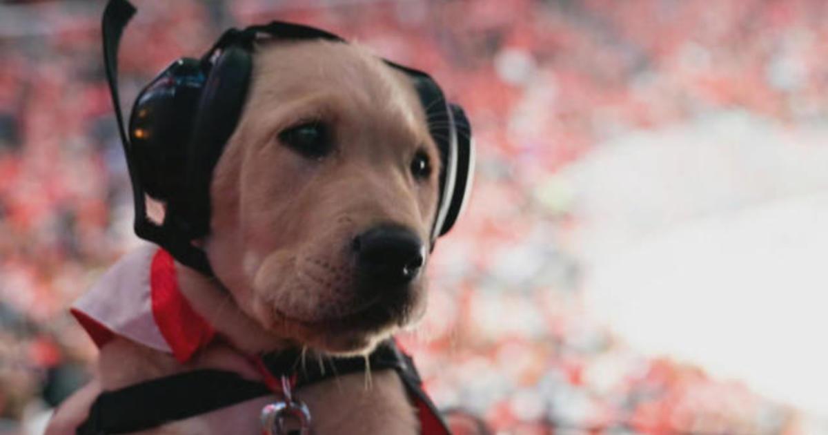 Washington Capitals puppy Captain training to be a service dog