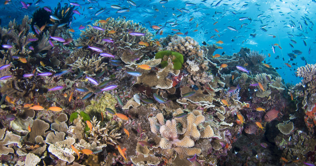 Damaged coral reefs could be restored using underwater loudspeakers
