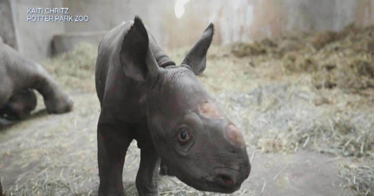 Rare black rhino born at Michigan zoo on Christmas
