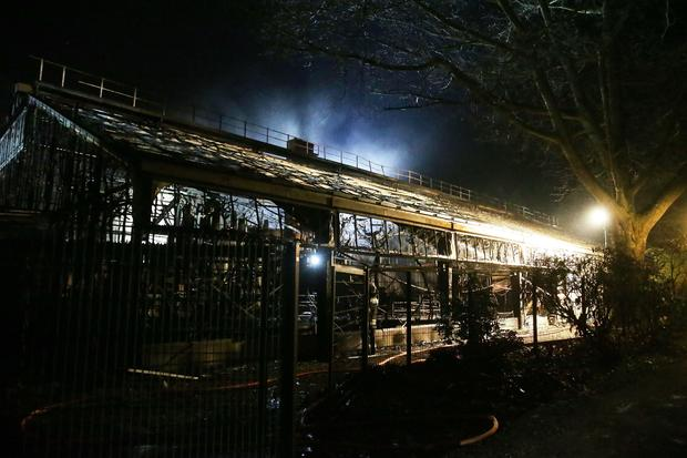 GERMANY-ZOO-ANIMALS-FIRE