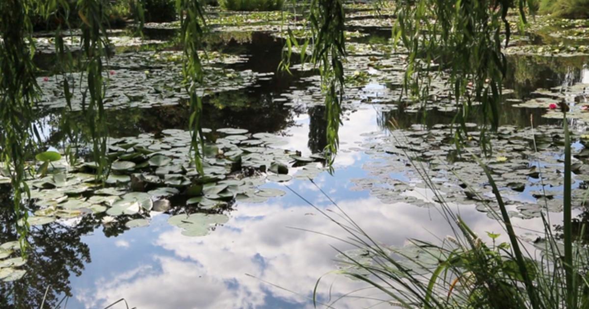 Nature: Monet's garden