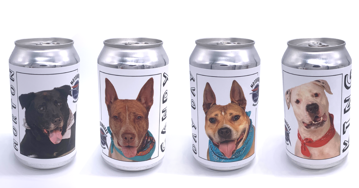 Cruiser adoptable dog cans