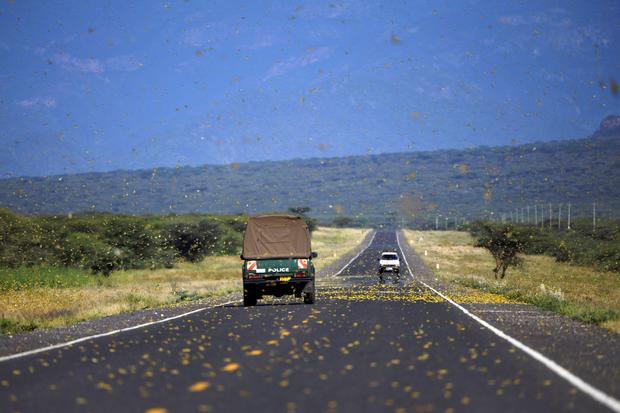 KENYA-CLIMATE-LOCUST-NATURE
